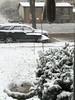 "It's snowing!  <span class=""spacer_LB_caption""> • </span> <br> Front yard feeders  <span class=""spacer_LB_caption""> • </span> <br> Bridgeton, St. Louis County, Missouri  <span class=""spacer_LB_caption""> • </span> <br> 2019-11-11"