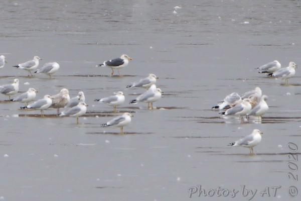 Birding 2020 February