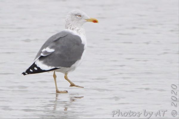 2020-02-15 Riverlands Migratory Bird Sanctuary