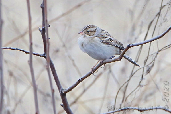 2020-01-02 Riverlands Migratory Bird Sanctuary