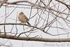"Clay-colored Sparrow   <span class=""spacer_LB_caption""> • </span> <br> Behind the Audubon Center   <span class=""spacer_LB_caption""> • </span> <br> Riverlands Migratory Bird Sanctuary"