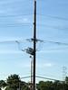 "Western Kingbird nest pole <span class=""spacer_LB_caption""> • </span> <br> Western Kingbird on nest <span class=""spacer_LB_caption""> • </span> <br> From Machinist Hall Parking Lot <span class=""spacer_LB_caption""> • </span> <br> Natural Bridge Road <span class=""spacer_LB_caption""> • </span> <br> City of Bridgeton <span class=""spacer_LB_caption""> • </span> <br> St. Louis County"