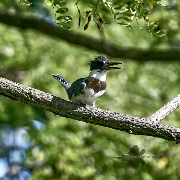 www.tmcbphoto.com