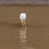 106_20130823_124131_Africa_7983_555_YellowBilledStork