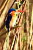 CRAY-AfricaBirds-IMG_1330U
