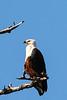 CRAY-AfricaBirds-IMG_1225U