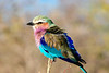 CRAY-AfricaBirds-IMG_1531U