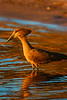 CRAY-AfricaBirds-IMG_1451