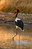 6CRAY-AfricaBirds-IMG_3009A