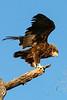 CRAY-AfricaBirds-IMG_2286U