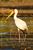 CRAY-AfricaBirds-IMG_1406