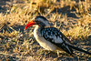 CRAY-AfricaBirds-IMG_1803U