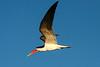CRAY-AfricaBirds-IMG_1364U