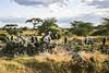 1974-02-102 Marabou Stork, Amboseli, June 15 1974