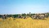 1974-02-1975 African Elephant, Masai Mara, June 11 1974