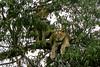 1974-02-17 Lions, Lake Manyara June 15 1974