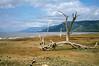 1974-02-1854 Lake shore, Lake Manyara, June 15 1974