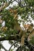 1974-02-1849 Lions, Lake Manyara June 15 1974