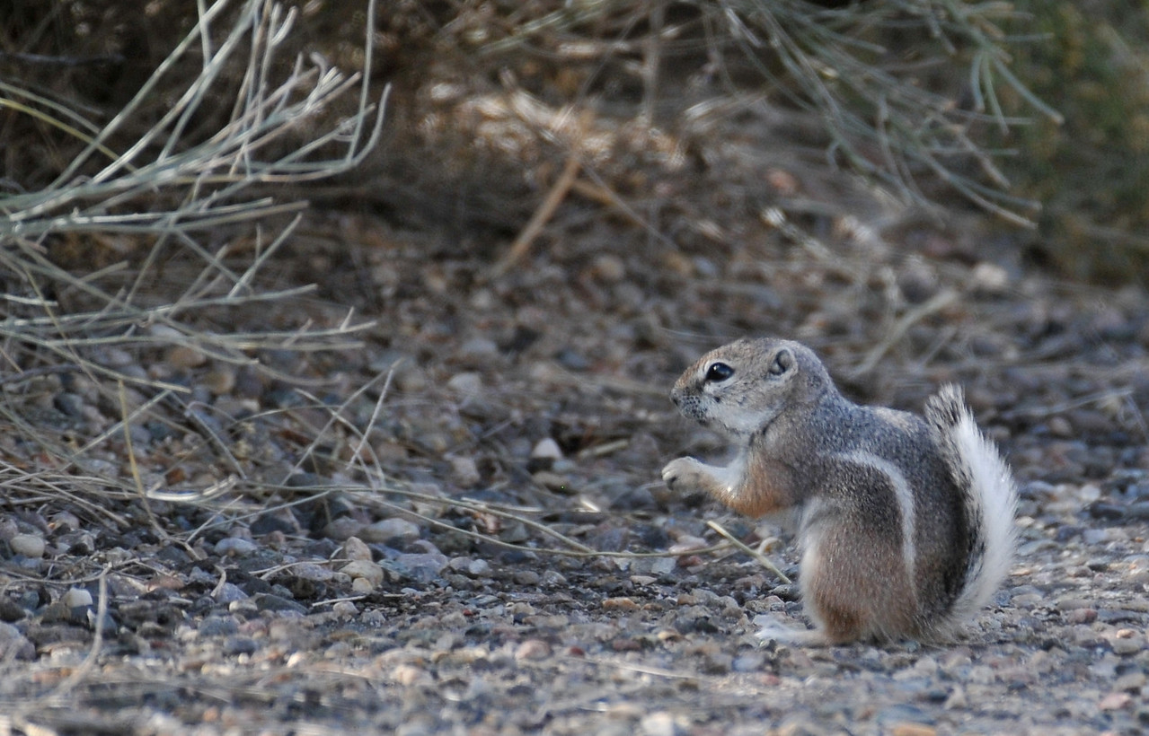 Boca Negra Canyon, Albuquerque, New Mexico