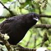 American Crow<br /> 18 JUN 2012
