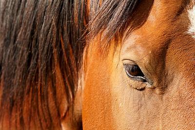 Horse, Winthrop, WA