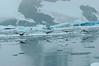 AntarcticShag