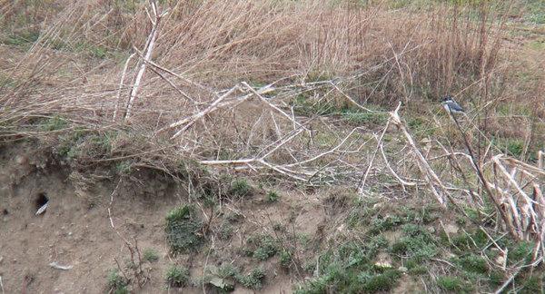 April 13--Male guarding hole