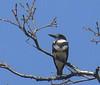 April 14 -- Female on tree