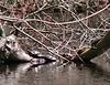 4/27  Mill Road Turtles