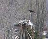 4/28 Winsegansett Ospreys