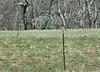 American Kestrel at Shaw's Cove Road - April 2
