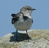 Mockingbird at Seaview Landing