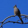 Bird5215