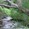 This was a dry creek when I arrived there but we had a lot of rain that night and I was awaken<br /> by the sound of the running water next morning.