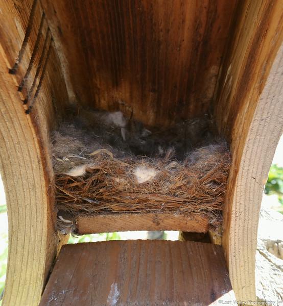 The nestlings huddled together.