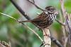 Sparrow6552