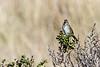 Sparrow6450