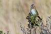 Sparrow6448