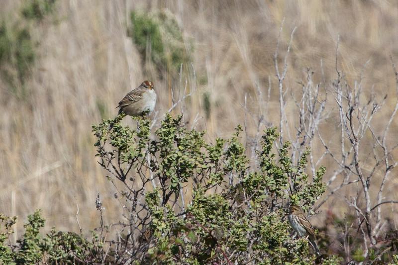 Sparrow6438