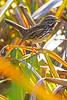 Sparrow6475