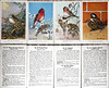 Audubon Bird Cards