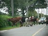 August 27 -- traffic jam on Sconticut Neck Road