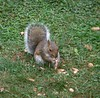 oblivious, uncaring squirrel