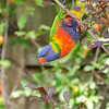 Keeping an eye on the photographer?<br /> Backyard, December 2011