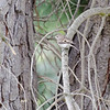 Not a good image, but I sure would like to know what bird this is.<br /> Norton's Park (Melbourne) December 2011
