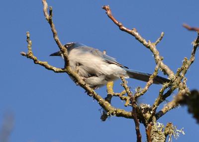 Backyard Birds -- 1H 2012