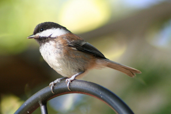 Birds Shared 3-11-17