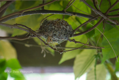 The view of the hummingbird nest from our doorway.