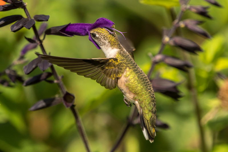 Getting in the Salvia