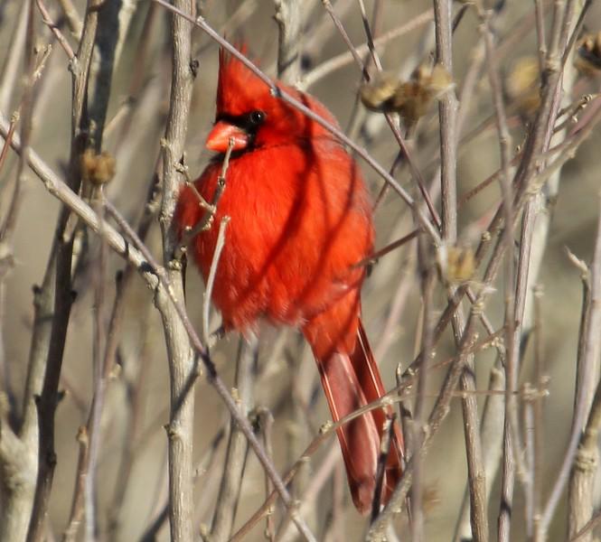 Cardinal 2-14-16
